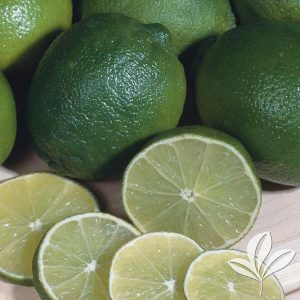 Mexican Lime Bush